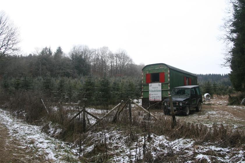 Idylle im Eifelwald: Die Weihnachtsbaumkultur von Martin Roters bei Kerpen.