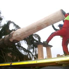 Verladen des 25-Meter-Baumes auf dem Tieflader