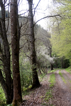 Waldweg oberhalb von Kopp.