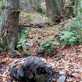 Noch ein Rinnsaal: Der Wahlerbach unterhalb der Burg Pyrmont mit einem kleinen Übergang aus Schiefer.
