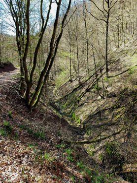 """Waldweg zur """"Helmut's Eiche"""""""