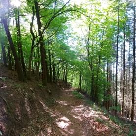 """""""Teilung"""" auf dem Weg zur Florianhütte: Links Buchenwald, rechts Fichtenbestand."""