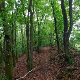 Panorama: Waldweg zur Liboriuskapelle.