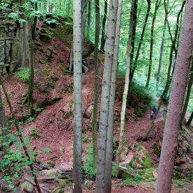 """Auf dem """"Teufelspfad"""": Zuweg von den Irreler Wasserfällen"""