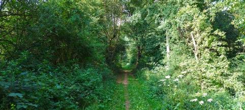 Waldwegidylle: Der Tiefenbachweg von Bergheim hinunter nach Mechernich.
