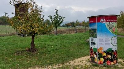 Kirschen-Lehrpfad auf dem Rheinplateau von Filsen.