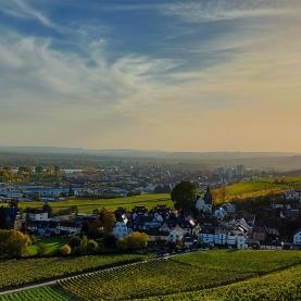 Schloss Johannisberg Blick Richtung Westen von der Rheinseite