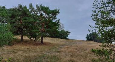 Heidelandschaft oberhalb von Ehrental.